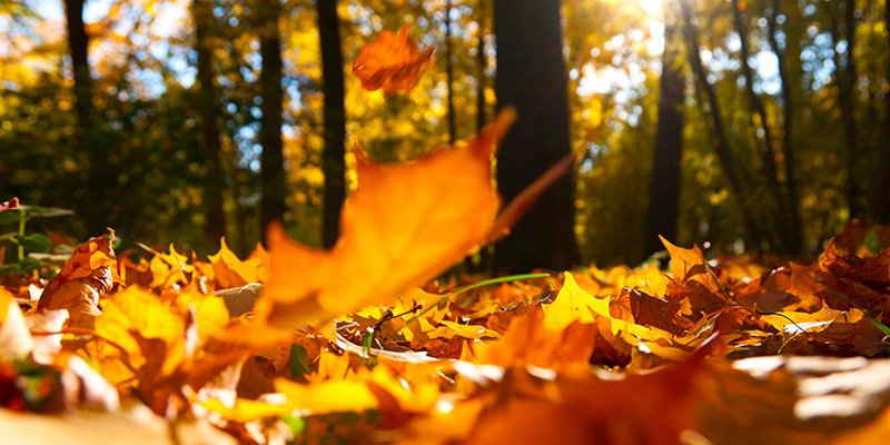 Get your HVAC Ready for Fall